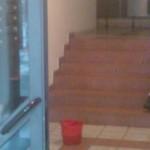 scari 05 150x150 Curatenie in scari de bloc